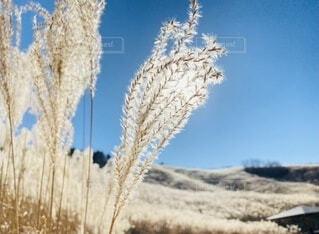 自然,風景,空,屋外,太陽,青空,山,草,ススキ,霜,草木
