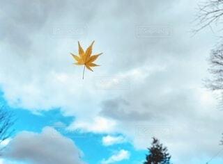空,紅葉,屋外,雲,落ち葉,樹木,モミジ