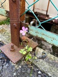 花,屋外,フェンス,地面,草木