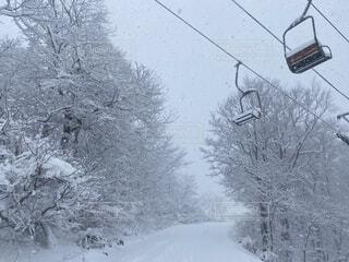 風景,冬,雪,屋外,樹木,スキー,寒い,スノボ,ゲレンデ,冷たい,リフト
