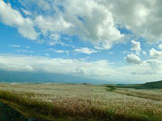 自然,風景,空,夏,屋外,雲,青い空,景色,草,大地,草木,日中,すすき