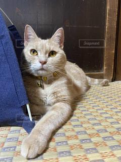 畳と猫の写真・画像素材[4119534]