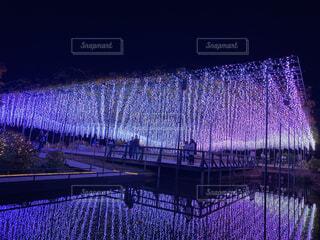 夜,橋,屋外,紫,暗い,藤,イルミネーション,フェンス,明るい,フラワーパーク,あしかが