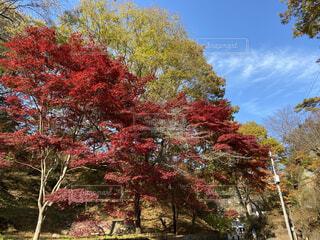 風景,空,花,秋,紅葉,屋外,赤,綺麗,葉,美しい,樹木,神秘,黄,草木