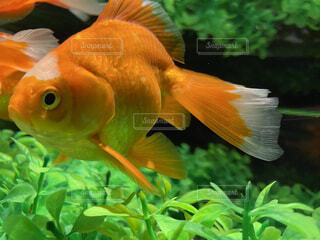 動物,鳥,魚,屋外,綺麗,水族館,葉,オレンジ,美しい,容器,金魚,神秘,金魚鉢