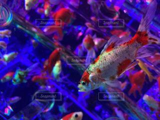 動物,魚,水族館,葉,美しい,容器,金魚,神秘