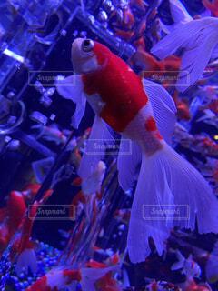 魚,綺麗,水族館,葉,美しい,容器,金魚,神秘,金魚鉢