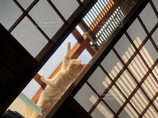 猫,空,建物,屋内,屋外,窓,子猫,外,癒し,可愛い,和風,障子