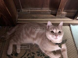 上目遣いな猫の写真・画像素材[4128100]