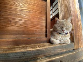 猫のお仕事は寝ることの写真・画像素材[4138530]