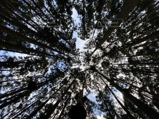 自然,空,森林,木,屋外,森,葉,樹木,草木,針葉樹