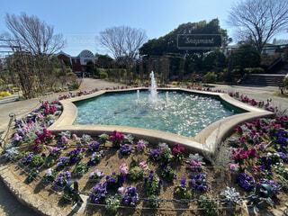 花と噴水の写真・画像素材[4184192]