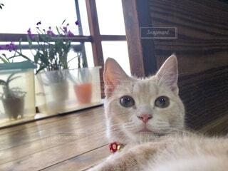 猫顔の写真・画像素材[4197074]