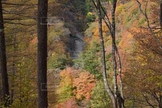 公園,秋,森林,屋外,山,景色,樹木,山梨県,落葉,眺め,山塊