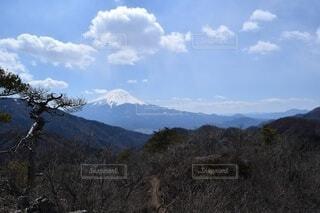 自然,空,富士山,森林,屋外,雲,雪山,山,景色,樹木,高原,景観,眺め,山塊
