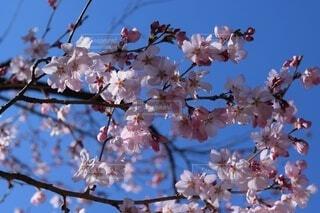 空,花,森林,山,景色,高原,景観,草木,眺め,桜の花,さくら,ブルーム,ブロッサム