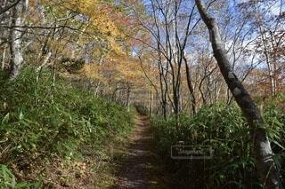 自然,風景,秋,森林,屋外,景色,樹木,高原,景観,落葉,眺め,那須岳,山腹