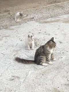 猫,動物,屋外,地面