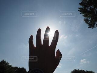 空,屋外,太陽,雲,手,影,草木,日中