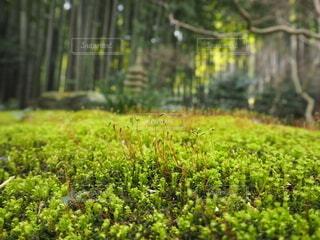 自然,秋,森林,屋外,緑,葉,草,樹木,苔,生命,生命力