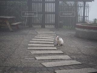 猫,動物,屋外,野良猫,地面