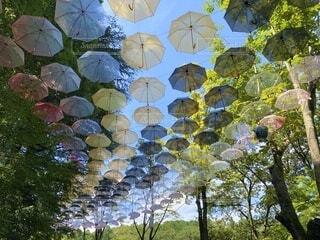 傘,屋外,カラフル,草,樹木,たくさん