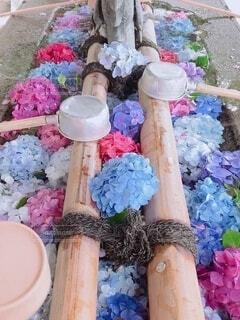花,カラフル,紫陽花,お寺,手水舎