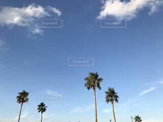 自然,空,屋外,雲,青い空,樹木,ヤシの木,草木,ヤシ目