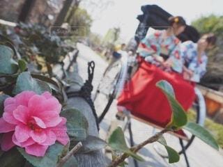 花,屋外,京都,着物,和服,人力車,草木