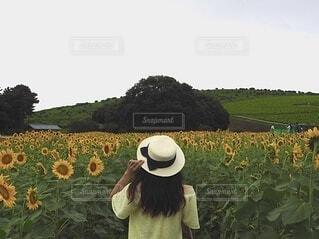 空,花,アクセサリー,屋外,緑,ひまわり,帽子,黄色,景色,女の子,草,麦わら帽子,ひまわり畑,草木,ファーム,カウボーイハット,日よけ帽