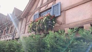花,屋外,窓,家,観葉植物
