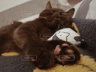 猫,動物,屋内,子猫