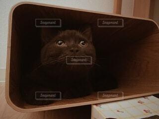 猫,動物,屋内,座る