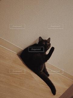 猫,動物,黒,床に座った猫