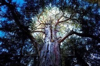 命の力溢れる樹の写真・画像素材[4116048]