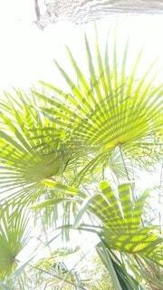 緑,葉,光,樹木,グリーン,草木,シュロ