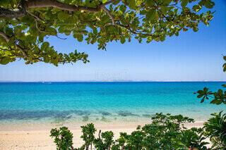 自然,風景,海,空,屋外,ビーチ,水面,樹木