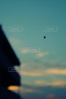 風景,空,屋外,夕焼け,夕方,シルエット,虫,蜘蛛