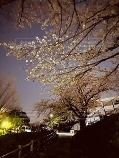 空,屋外,樹木