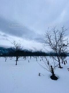 自然,空,冬,雪,屋外,雲,樹木