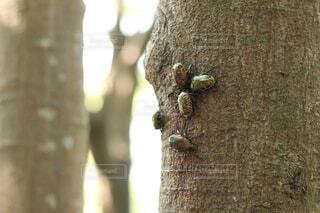 自然,夏,動物,屋外,樹木,昆虫,カナブン,樹皮