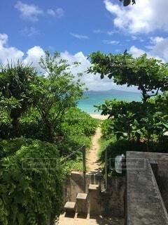 自然,空,屋外,階段,雲,青,樹木,石,細い道,秘密基地,ワクワク,秘密