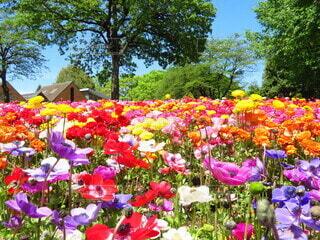 空,花,屋外,ピンク,赤,白,カラフル,紫,黄色,樹木,colorful,草木,ガーデン,ブルーム