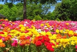 花,屋外,ピンク,赤,カラフル,黄色,景色,草,樹木,元気,ビタミンカラー,カラー,colorful,草木,ポップ,ガーデン,ブルーム,フローラ