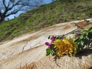 子ども,空,花,春,屋外,晴れ,青,ブーケ,切り株,flower,快晴,木目,bouquet,ブルーム