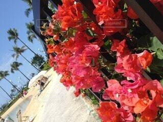 海,空,花,ピンク,南国,椰子の木,赤,花束,砂浜,海辺,癒し,ヤシの木,ブーゲンビリア,草木