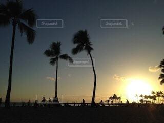 自然,風景,空,屋外,太陽,ビーチ,雲,夕焼け,夕暮れ,水平線,樹木,ヤシの木,beach,sunset,日の入り,サンセット,グラデーション,草木,パーム,ヤシ目