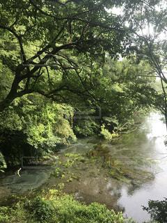 自然,森林,屋外,水面,景色,樹木,草木