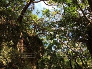 空,秋,森林,屋外,葉,樹木,日陰,草木