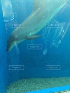 動物,魚,水族館,水面,葉,サメ,海獣,クジラ,フィン,極